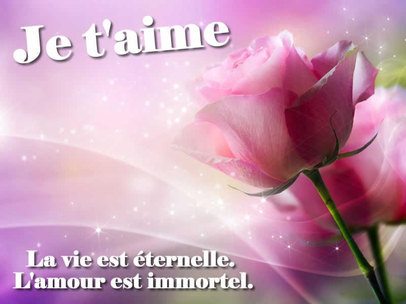 Image d'amour fleur