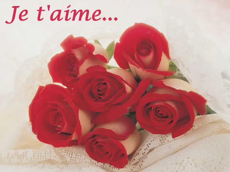 Images d'amour avec roses