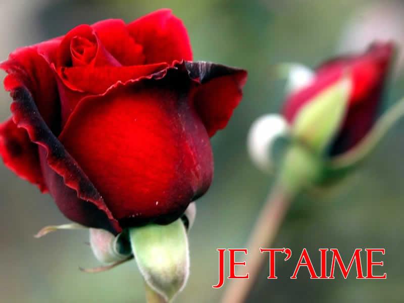 Photo d'amour avec roses